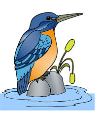 Small Picture Kingfisher 1 Coloring Pages for Kids to Color and Print