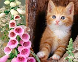 cute baby cats wallpapers group 76