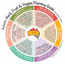 Vegetable Garden Seasonal Growing Guide Australia About