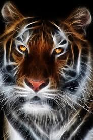 black tiger with blue eyes wallpaper. Plain Tiger On Black Tiger With Blue Eyes Wallpaper