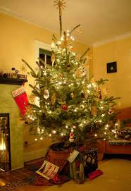 potted-christmas-tree