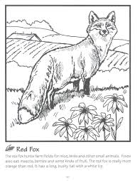 Small Picture Beautiful Wildlife Coloring Book Ideas New Printable Coloring