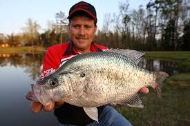 Crappie Length To Weight Chart Crappie Length To Weight Conversion Chart