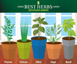 graphic courtesy of fix com there s a reason why herb gardens