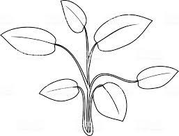 Kleurplaat Abstract Water Plant Met Bladeren Stockvectorkunst En