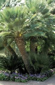 Full Size of Plant:palm House Plants Palm Trees Turn Yard Into Paradise  Wonderful Palm ...