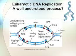 Using A Viral Protein To Study Dna Replication Ppt Video Online