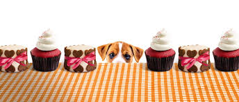 baking sale the big barking bake sale uk world animal protection