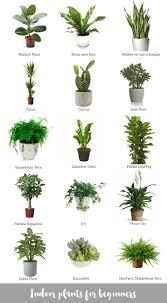 tropical office plants. Tropical Indoor Plants On Dacfceceabdbb Easiest House Office U