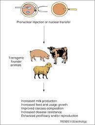 Transgenic Animals Agricultural Applications For Transgenic Livestock Trends
