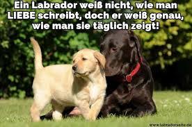 Labrador Zitate Und Sprüche