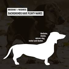 Dachshund Color Chart How To Breed Dachshunds Free Guide To Breeding Dachshunds