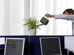 plants for office cubicle. All Plants Need Water For Office Cubicle L