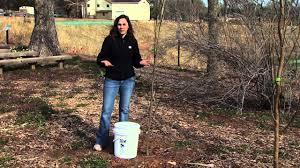 proper tree irrigation