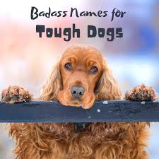 90 tough and bad dog names outlaws