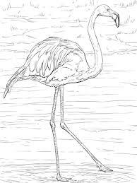 Amerikaanse Of Caraïbische Flamingo Kleurplaat Gratis Kleurplaten