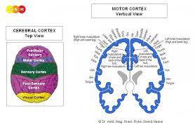 Dr Hamer Disease Chart Pdf Skeletal Muscles