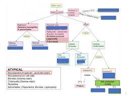 Gram Negative Flow Chart Diagram Quizlet