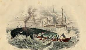 The Essex whaling ship: the inspiration for Moby Dick, involved killing &  eating their shipmates