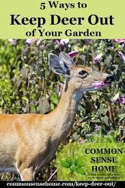 keep deer out of your garden 5 deer
