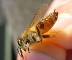 Varroa Mite Biology And Diagnosis