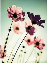 Bolcom Fotobehang Roze Bloemen 192x260 Cm Eenvoudig Aan Te