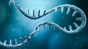 mRNA Tracking with Fluorescent Cytosine Preserves Natural Behavior