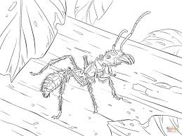 Small Picture Coloring Pages Bullet Ant Coloring Page Free Printable Coloring