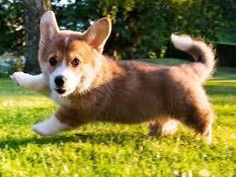 est dog breeds in the world work