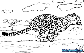 cheetah coloring pictures. Fine Coloring Interior Cute Baby Cheetah Coloring Pages For Kids Cheap Lovely 10  Pictures H