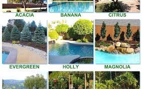 best plants around pool best worst trees plant around pool blog poolside plants brisbane