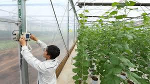 Giải pháp công nghệ Việt toàn diện cho nông nghiệp thông minh