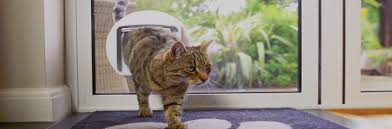cat flap fitting cat flap fitters