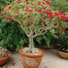 best plants for full sun outdoor plants for full sun desert gardening using houseplants outdoors in