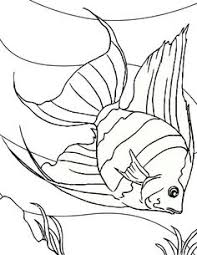 Small Picture fish color page catfish Coloring Pinterest Catfish and Fish