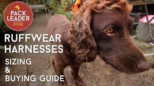 Ruffwear Harness Size Chart Product Guide And Review For The Ruffwear Harness Pack Leader Dog Adventures