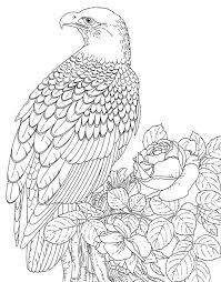 鷹がかっこいい寒い冬はおうちでぬりえタイム ぬりえ 塗り絵