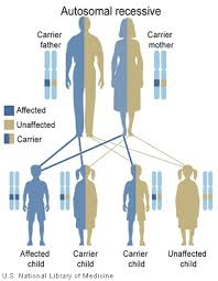 Cystic Fibrosis Inheritance Pattern Fascinating Main Inheritance Patterns Genes In Life
