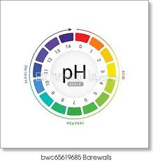 Ph Scale Indicator Chart Diagram Acidic Alkaline Measure Ph Analysis Vector Chemical Scale Value Test Art Print Poster