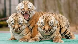 Image result for animals babies