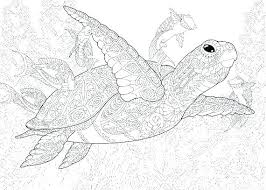 Sea Animals Coloring Pages Pdf Seashell Cutouts Printable Clam Shell