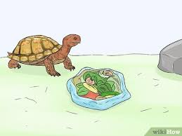 how to care for your box turtle 15