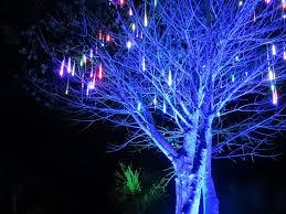 Naples Botanical Gardens Night Lights December 21 Naples And Hartford In Season Night Lights At The Garden