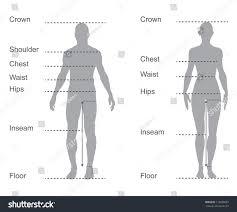 Described Bodybuilding Measurement Chart Human Measurements