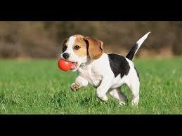 cute baby dog. Plain Cute CARTOON FOR KIDS  BABY DOG CUTE  ENGLISH In Cute Baby Dog P