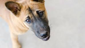 5 Things Not to Do When Teaching Your Puppy Not to <b>Bite</b> - Puppy ...