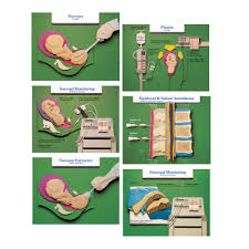 Educational Episiotomy Paper Chart Childbirth Graphics