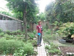 backyard gardening. Backyard Gardening And Climate Change