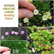 learn how to choose the best plants for your outdoor miniature garden