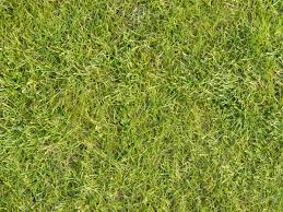 tall grass texture seamless. Seamless Lawn Texture With Grass Of Uniform Type And Full Color. Tall E